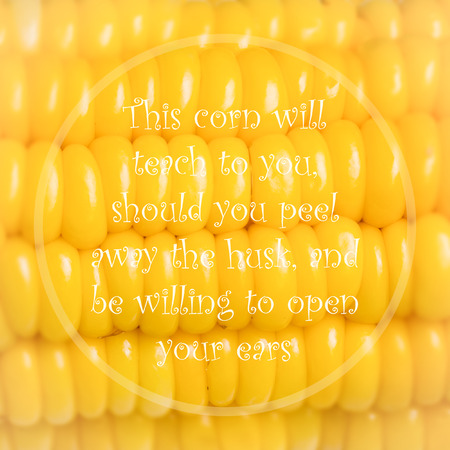 wymowny: Meaningful quote on blurred corn background