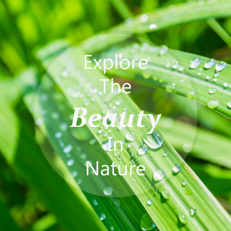 meaningful: Meaningful quote on blurred lemongrass background, explore the beauty in nature