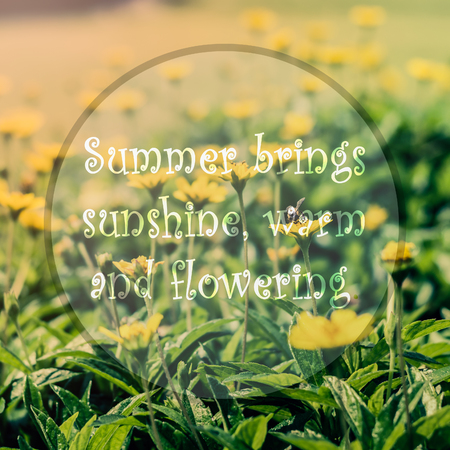 meaningful: Meaningful quote on blurred yellow flower background, summer brings sunshine, warm and flowering.