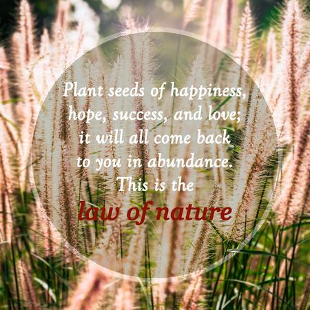 Bedeutungsvolle Zitate auf Gras Blumen in der Wiese unter Sonnenlicht, Pflanzensamen von Glück, Hoffnung, Erfolg und Liebe; es wird in Hülle und Fülle zu Ihnen kommen alle zurück. Das ist das Gesetz der Natur. Standard-Bild
