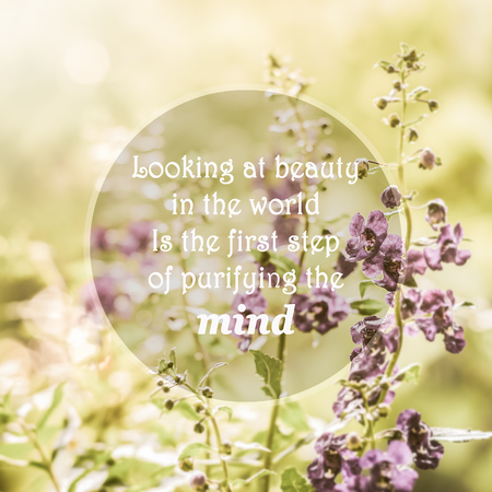 wymowny: Meaningful quotes on purple flowers in meadow under sunlight, Looking at beauty in the world, is the first step of purifying the mind.