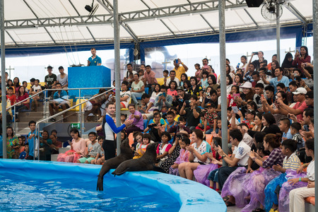 enjoyed: PHUKET THAILAND - JAN 9, 2016 : Many people are enjoyed to watch clever seals with trainer during dolphin show in phuket