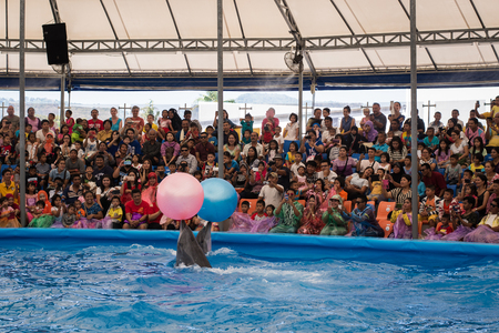 9 ball: PHUKET THAILAND - JAN 9, 2016 : Clever dolphins playing a ball in the pond during dolphin show in phuket