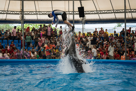 the showman: PHUKET THAILAND - JAN 9, 2016 : Performance of clever dolphins with stunts in the pond during dolphin show in phuket