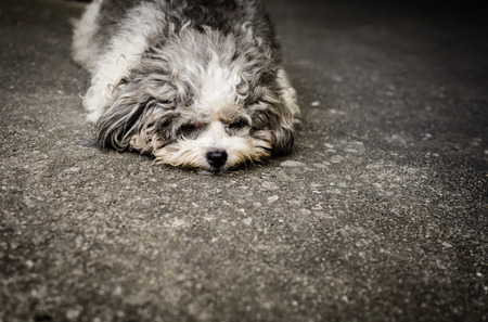lie down: Homeless shabby doggy is lie down on the street Stock Photo