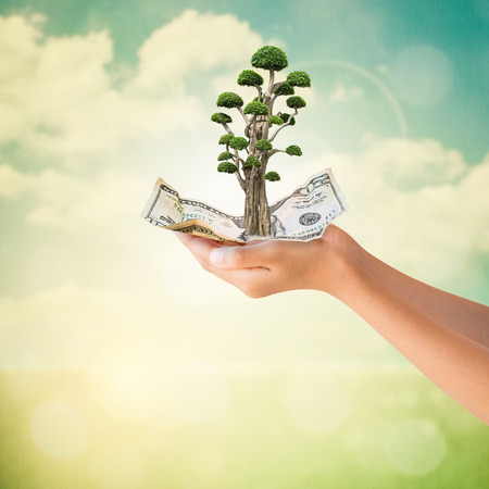 us dollars: Hands holding crumpled US Dollars note with bonsai tree in natural summer  background, Conservation concept