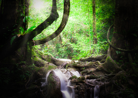 manora: Tropical jungle in Sa Nang Manora waterfall under sunlight, Phang Nga, Thailand