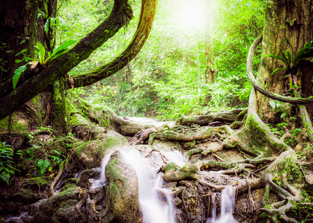 manora: Tropical jungle in Sa Nang Manora waterfall, Phang Nga, Thailand Stock Photo