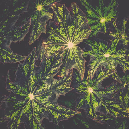 Colorful tropical plant background, Nature texture concept.