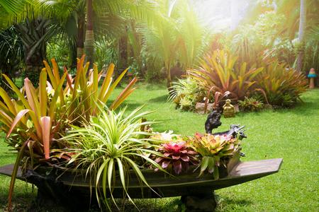 Beautiful tropical garden in summer under sunlight.