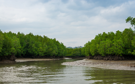 Tropical mangrove forest with cloudy blue sky in phang nga bay, Thailand.