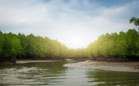 Tropical mangrove forest under sunlight with cloudy blue sky in phang nga bay, Thailand.