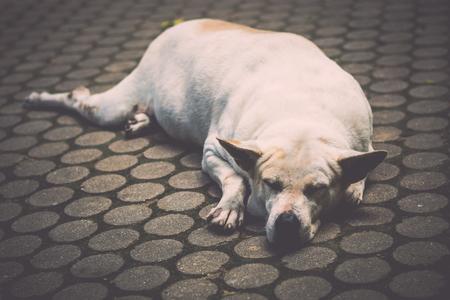 Close up homeless dog is sleeping on the walk way.