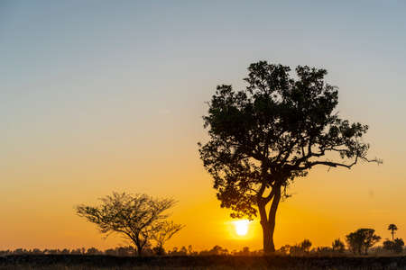 Golden beautiful Sunrise clear at dry grass fields and silhouette tree in the countryside at morning Standard-Bild