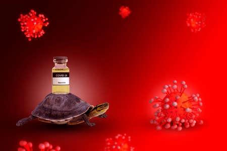 Tortoise carrying coronavirus covid-19 vaccine in bottle to destruction virus model on concept delay or slow transportation management