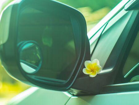 auto glass: white Plumeria or Frangipani flowers on auto glass