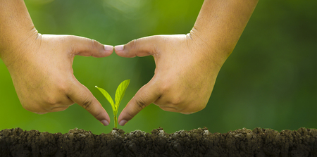 Planting trees, loving the environment and protecting nature Nourishing the plants World Environment Day To help the world look beautiful Stock fotó