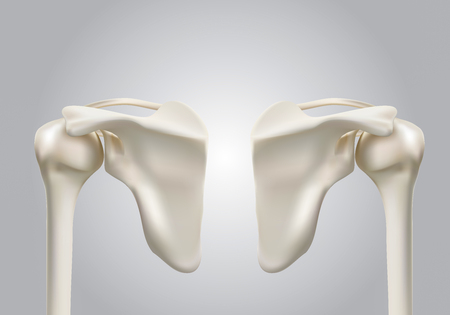 Precise medical 3D images of human shoulder bones