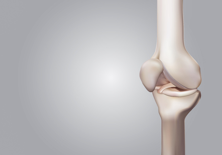 3D rendering, illustrations of human and medical knee science Stock Photo