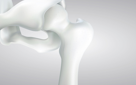 Thigh bone and human sphincter. On a white background - 3D rendering can be word or word paste. Stock fotó