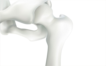 Thigh bone and human sphincter. On a white background - 3D rendering can be word or word paste. Stock Photo