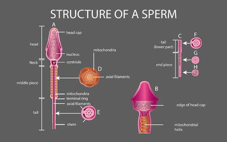 One sperm is human semen. In the white back Banco de Imagens