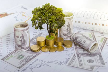 The tree is growing both on the progress of money and financial reports, along with financial accounts, business, investment on the investors table. Front investment concept