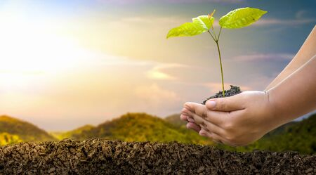 Planting small trees on a natural mountain Conservation of forest concepts and Earth Day in mobile phones, trees planted on nature, forest conservation concepts Stock Photo