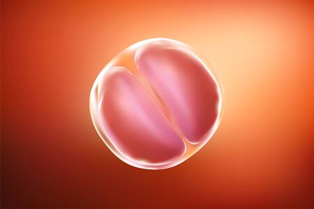 Fetus & Baby in mothers womb, As illustrated with red tones