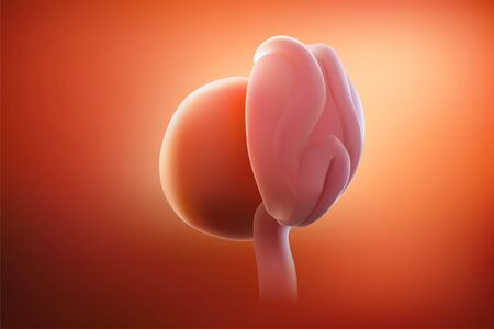 The image of the embryo or the egg in the mothers womb has a reddish tint. 3D illustration