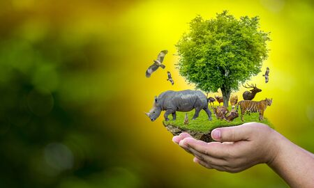 Wildlife Conservation Day Wild animals to the home. Or wildlife protection 스톡 콘텐츠