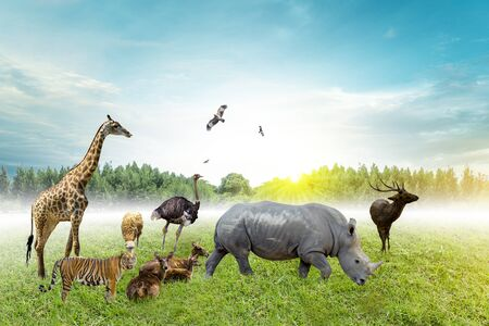 Wildlife Conservation Day Wild animals to the home. Or wildlife protection Reklamní fotografie