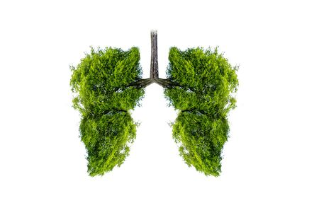 Lung green tree-shaped images, medical concepts, autopsy, 3D display and animals as an element