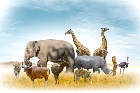 African safari and Asian animals in the theme illustration, filled with many animals, a white border image