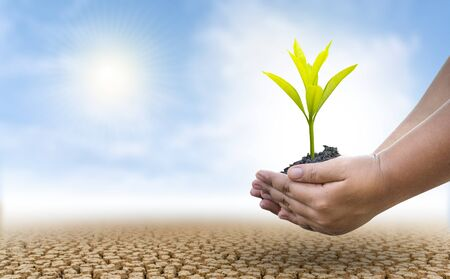 The concept of environmental restoration The growth of seedlings on cracked soil, cracked soil in the dry season affected by global warming causes climate change, water shortages.