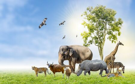 Wildlife Conservation Day Wild animals to the home. Or wildlife protection Фото со стока