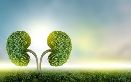 The tree (kidney) is a 3D illustration of the medical environmental concept.
