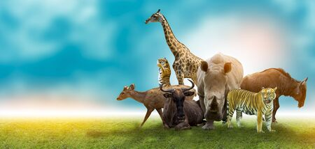 Wildlife Conservation Day Wild animals to the home. Or wildlife protection Stock fotó