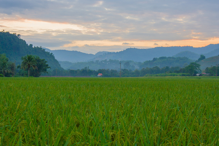 northern light: Rice field with sunset light at Northern Thailand. Stock Photo