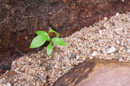 Green young plant growing through small rocks with flanked by brown stone. (Autumn filter effect)