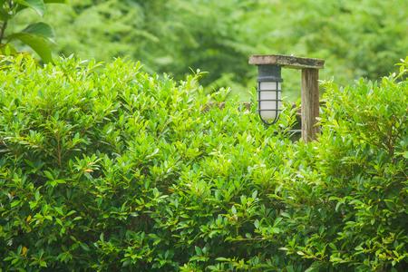 Uitstekende lamp die op houten sporen bij openluchttuin hangt die met groene bomen wordt omringd. (Vintage filtereffect)