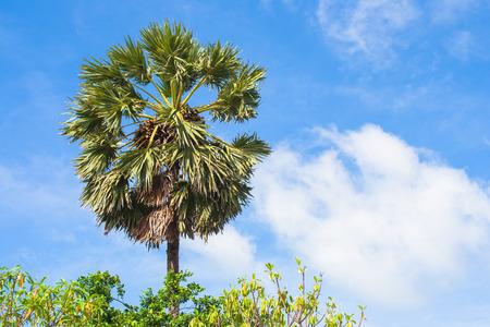 Sluit omhoog groene palm met blauwe hemelachtergrond bij het overzees. Stockfoto