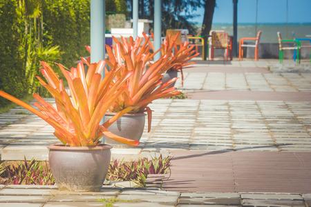 Beautiful flowerpot on concrete floor in outdoor garden. (Autumn filter effect)