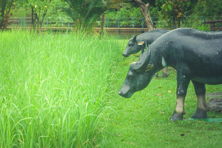 Buffalo statue standing on green grass in rice filed at public park. Stock Photo