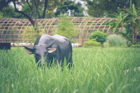 Buffelsstandbeeld die zich op groen gras in rijst bevinden die bij openbaar park wordt ingediend.