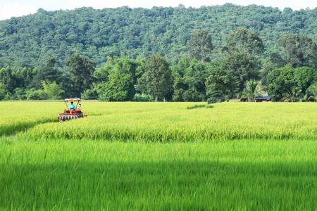 feild: Green Rice feild and Tractor