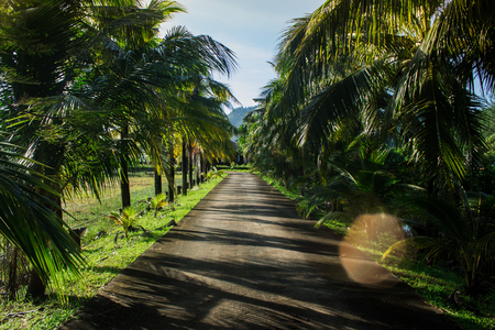 Coconut trees at the entrance to the house in Phuket Thailand Stock Photo