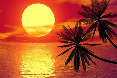 red sunset and palm photo