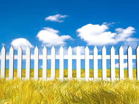 Fresh yellow grass on blue sunny sky background photo