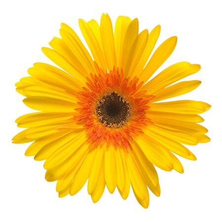 yellow flower isolated over white background Archivio Fotografico